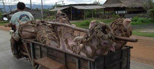 Cambodia Камбоджа транспорт