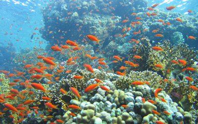 Коралловый риф, парк Рас Мохаммед, Египет